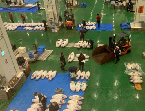 Der Toyosu Fischmarkt in Tokio