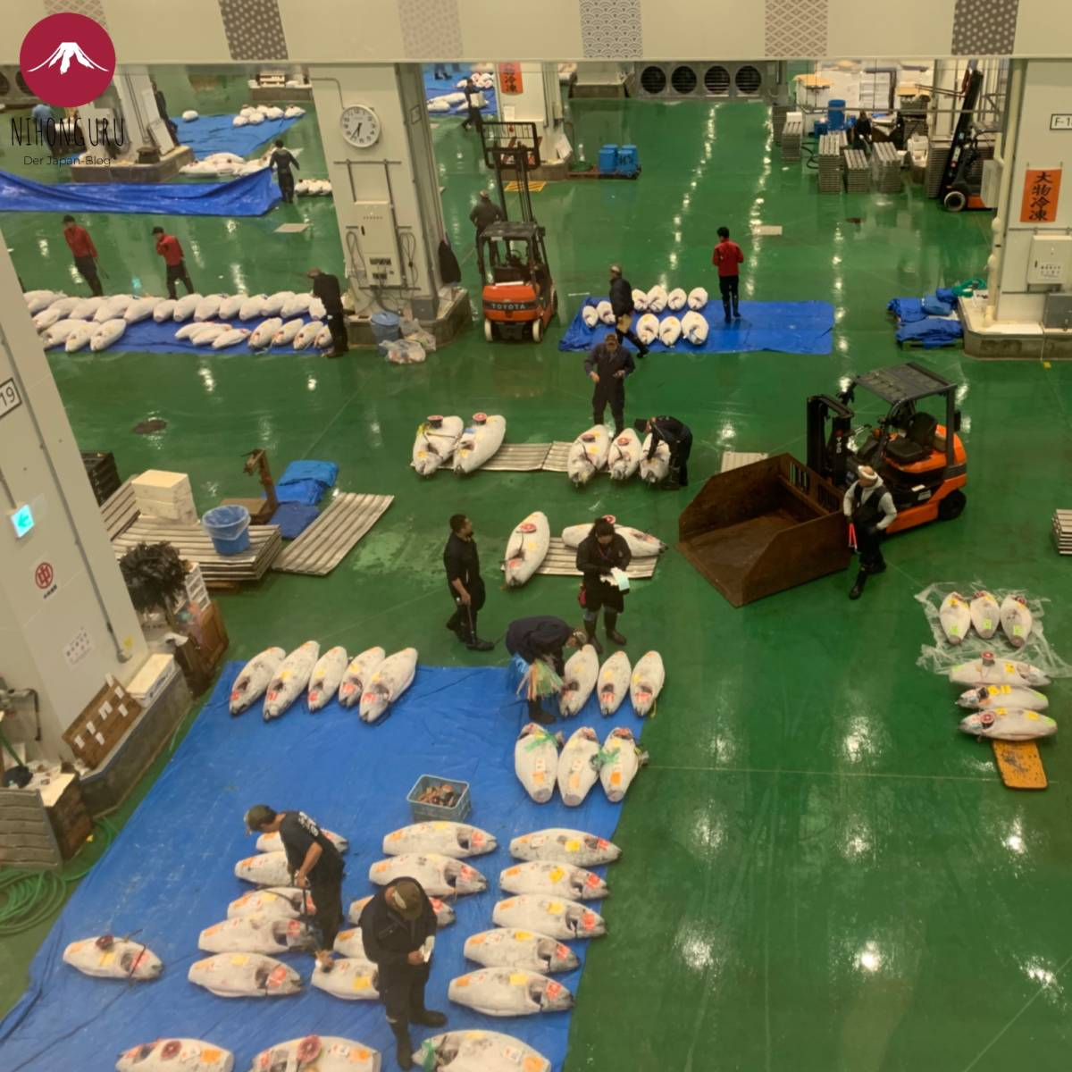 Toyosu Fischmarkt Thunfischauktion Thunfisch Auktion