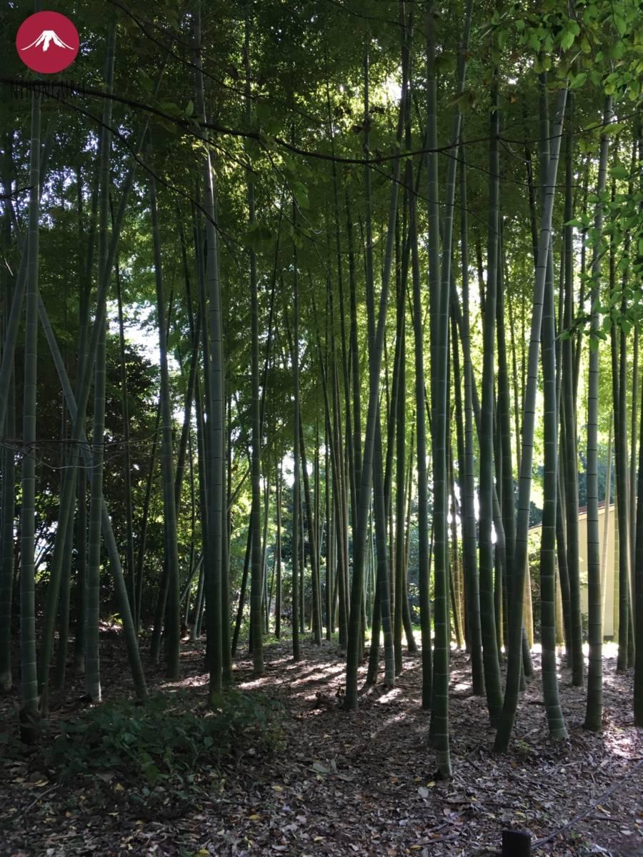 Bambusgarten Palast Tokio